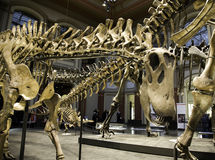 Paleontological Museum in Berlin Royalty Free Stock Images