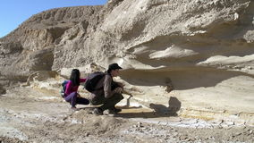 Paleontological Research stock video footage