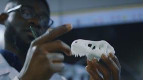 Paleontologist que explora o modelo impresso 3-D do dinossauro vídeos de arquivo