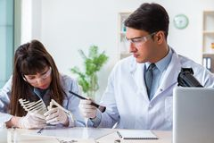 The paleontologists looking at bones of extinct animals. Paleontologists looking at bones of extinct animals royalty free stock photo