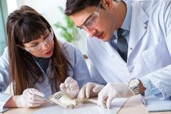 The paleontologists looking at bones of extinct animals. Paleontologists looking at bones of extinct animals royalty free stock images
