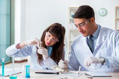 The paleontologists looking at bones of extinct animals. Paleontologists looking at bones of extinct animals royalty free stock photography