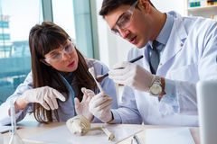 The paleontologists looking at bones of extinct animals. Paleontologists looking at bones of extinct animals stock photography