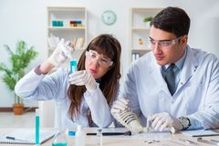 The paleontologists looking at bones of extinct animals. Paleontologists looking at bones of extinct animals royalty free stock photos