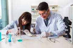 The paleontologists looking at bones of extinct animals stock image
