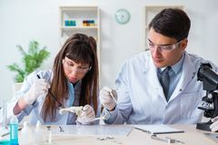 The paleontologists looking at bones of extinct animals stock photography