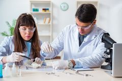 The paleontologists looking at bones of extinct animals. Paleontologists looking at bones of extinct animals royalty free stock image