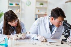 Paleontologistsna som ser ben av slocknade djur arkivbild