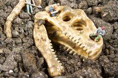 Paleontology stock image