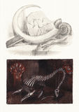 Paleontology. Still life with Fossils and Dinosaurs Bones. It is a Pencil Drawing & Sepia Toned Stock Images