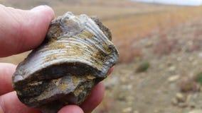 Paleontology wykopaliska Skamieniała ekskawacja i ekstrakcja zbiory wideo