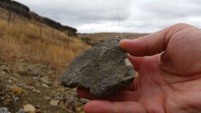 Paleontology wykopaliska Skamieniała ekskawacja i ekstrakcja zbiory