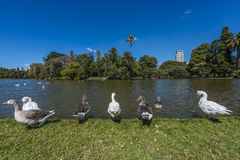 Palermo Woods in Buenos Aires, Argentina. Royalty Free Stock Photography
