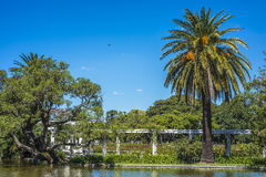 Palermo Woods in Buenos Aires, Argentina. Ducks on Parque Tres de Febrero, also known as the Bosques de Palermo (Palermo Woods), a 400 hectares urban park Stock Photo