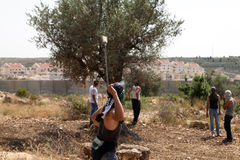 Palestinian Protester Shooting Rock at Protest Royalty Free Stock Photo