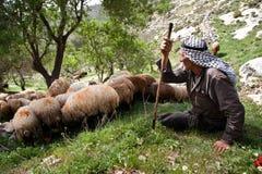 Palestinian shepherd Stock Photography