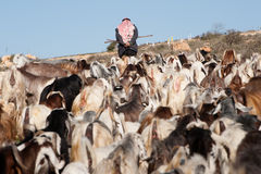 Palestinian shepherd Stock Photo