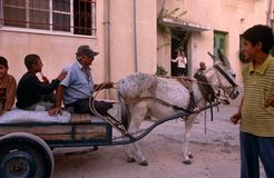 Palestinians riding on a donkey cart, Palestine Stock Images