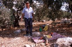 Palestinians working in an olive grove. Royalty Free Stock Photo