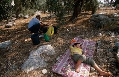 Palestinians working in an olive grove. Royalty Free Stock Images
