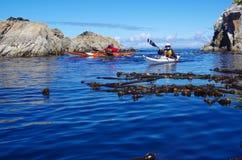 Paleta de dos kayakers entre las rocas y el quelpo imagen de archivo