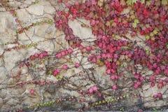 Paleta de flores mornas Imagem de Stock