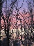 Paleta de la mañana. Imagen de archivo libre de regalías