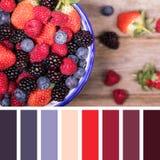 Paleta de la selección de la fruta del verano Fotos de archivo libres de regalías