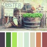 Paleta de los potes de langosta Fotografía de archivo