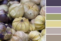 Paleta decorativa de color de fondo de los physalises Imagenes de archivo
