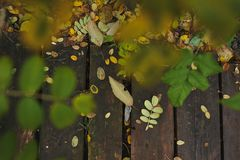 Paleta del otoño Foto de archivo libre de regalías