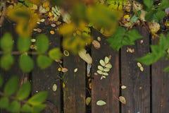 Paleta del otoño Imagen de archivo libre de regalías
