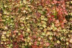 Paleta del otoño - 8 Fotos de archivo libres de regalías