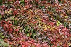 Paleta del otoño - 6 Fotos de archivo libres de regalías