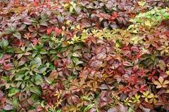 Paleta del otoño - 7 Foto de archivo