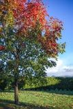 Paleta del otoño Fotos de archivo