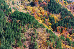 Paleta del otoño Imágenes de archivo libres de regalías