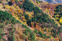 Paleta del otoño Fotografía de archivo libre de regalías