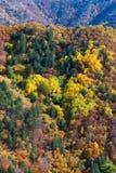 Paleta del otoño Imagenes de archivo