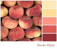 Paleta dos pêssegos Imagem de Stock Royalty Free