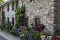 Paleta floral colorido com uma escolha larga da flora do verão em muitos plantadores fotografia de stock