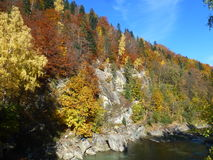 Paleta jesień Obraz Royalty Free