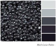 Paleta negra del caviar imagen de archivo libre de regalías