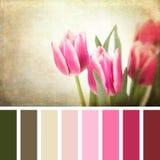 Paleta retra de los tulipanes Fotos de archivo