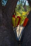 Paletas para el kajak imagen de archivo