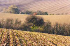 The palette of autumn agricultural field. Stripes and lines, nature background, South Moravia, Czech Republic Stock Image