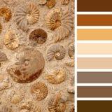 Palette d'ammonites Images libres de droits