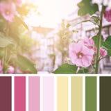 Palette de roses trémière d'Amsterdam Images libres de droits