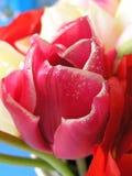 Palette des tulipes 2 Image stock
