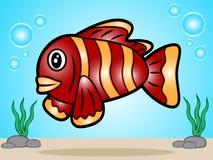 Palhaço Fish Fotografia de Stock Royalty Free